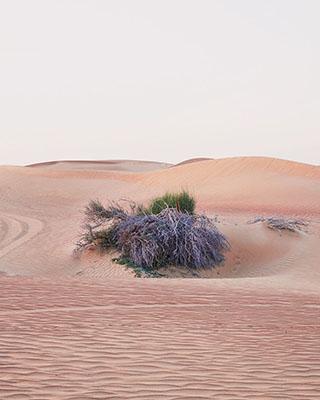 Desert Falcon_481